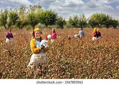 SAMARKAND, UZBEKISTAN - OCTOBER 13, 2018: Uzbek women in the cotton field harvest cotton in the outskirts of Samarkand, Uzbekistan