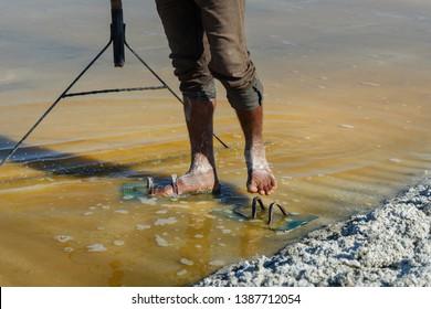 Sambhar, India - February 03, 2019: Worker's feet covered by salt on salt farm on Sambhar Salt Lake. Rajasthan