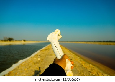 Sambhar, Rajasthan - December 14, 2018: A person is standing on the narrow passage going between two salt water parts with a bone in his hands.