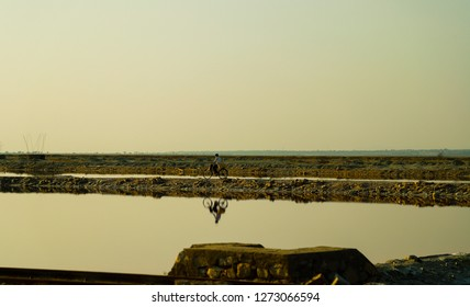 Sambhar, Rajasthan - December 14, 2018: A person is riding on a bicycle  through the Sambhar lake on a paved way.