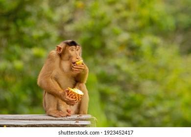 Samboja Lodge zachranna stanice medvedu a malajskych opic - Shutterstock ID 1923452417