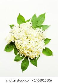 Sambucus elderberry flowers on white wooden background. Shallow dof.