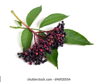 Sambucus nigra. Common names include elder, elderberry, black elder, European elder, European elderberry and European black elderberry.