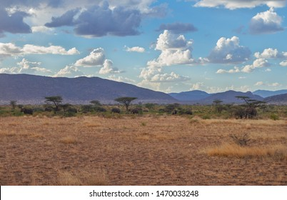 Samburu Reserve landscape with elephant herd under umbrella acacia trees and vast blue African sky and mountains in distance. Samburu National Reserve, Kenya, Africa. Elephants under trees and scrub