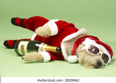 Samll Dog In Santa Costume Lying Down