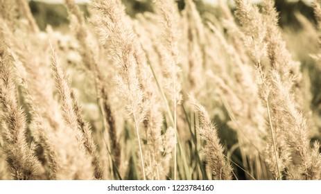Sammer, sunny field.