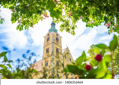 Samobor, Croatia, beautiful old catholic church, view through the leaves of trees in spring day