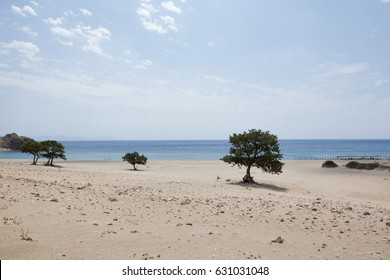 Samothrace island in Greece , Pahia Ammos beach , sandy and with large trees.