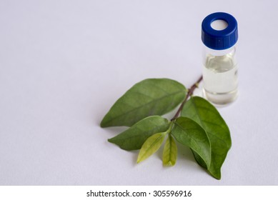 Sample vial and leaf isolated on white background