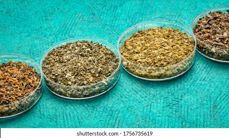 samples of seaweed diet supplements (bladderwrack, sea lettuce, wakame and Irish moss) - healthy eating and nutrition concept