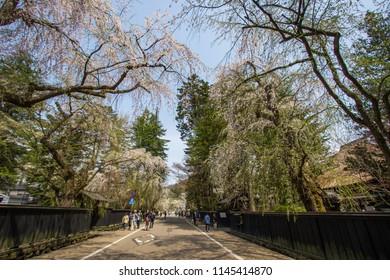 Samurai District of Kakunodate,Akita,Tohoku,Japan on April 27,2018:Tourists came to see weeping cherry trees(shidarezakura) along the street and historic homes in spring.