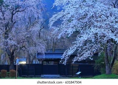 Samurai House in spring