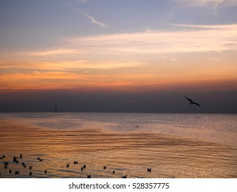 SAMUT PRAKAN THAILAND : flying seagull with colorful sky and sea on twilight sunset time seascape
