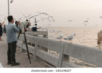 Samut Prakan, Thailand - November 14, 2018: Birds perch on bridge rail at sunset at Bang Pu seaside-has many migratory birds live therefore there become tourist attractions