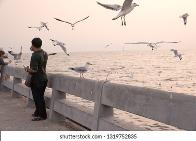 Samut Prakan, Thailand - November 14, 2018: Bird perches on bridge rail at sunset at Bang Pu seaside-has many migratory birds live therefore there become tourist attractions