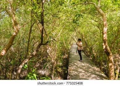 Samut Songkhram, Thailand - November, 26, 2017 : Unidentified name Visitors to nature walking on a wooden bridge in mangrove forest at samut songkhram, Thailand