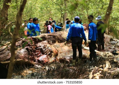 SAMUTPRAKARN, THAILAND - JULY 01 : A dead Bryde's whale weighs about 11 tons was washed ashore at Phra Samut Chedi district of Samut Prakarn province on JULY 01,2014 in Thailand.