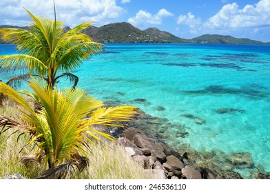 San Andres and Providencia, Colombia. Incredible view of caribbean waters, palm tree. Copy Space.