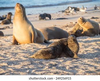 San Crisobel island - Galapagos National Park South America