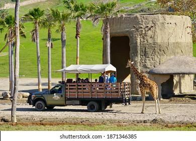 SAN DIEGO, CA -4 JAN 2020- View of an African giraffe in captivity at the San Diego Zoo Safari Park in San Diego, California, United States