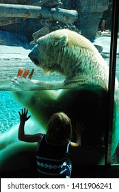 San Diego, CA, USA September 22, 2009  A young girl is captivated by a large polar bear munching on carrots in San Diego, California