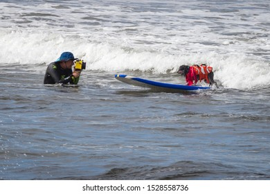 San Diego, California, United states, September 8th 2019: annual dog surfing competition. People and their pets having fun at beach.