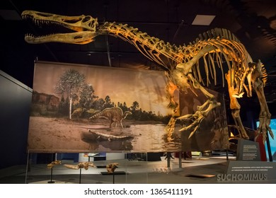 San Diego, California, USA – August 3, 2017: Horizontal shot of a suchomimus skeleton in a dinosaur's exhibition at the Natural History Museum, Balboa Park