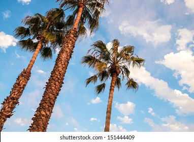 San Diego Palm Trees and Blue Sky, San Diego Southern California