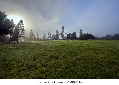 San Diego's famous Balboa park and its beautiful vegetation during the morning haze; the daily marine layer coming in from the Pacific Ocean settles over trees and grass