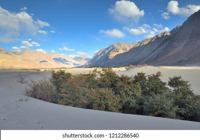 San dunes in Nubra Valley, Leh, Ladakh, India