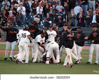 SAN FRANCISCO, CA - JULY 28: Giants Vs. Marlins: Giants Andres Torres get piled by teammates as they tap him on the helmet after winning hit.  July 28, 2010 ATT Park San Francisco California.