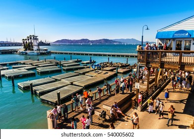 SAN FRANCISCO, CA - SEPTEMBER 20, 2015: Tourists and sea lions at Pier 39, San Francisco. Pier 39 is one of the famous landmarks of San Francisco. Picture made during a motorcycle road trip.