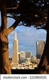 San Francisco, CA, USA July 15, 2014 The Transamerica Tower and the San Francisco skyline is framed by a distant tree