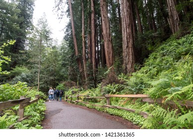 San Francisco, CA/ USA - May 10 2019: Muir Woods National Monument is the closest place to San Francisco where visitors can see coastal redwood trees.
