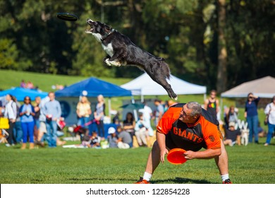 SAN FRANCISCO, CALIFORNIA - OCTOBER 28: Frisbee catching dog performs during 2012 Pet Pride Day October 28, 2012 in San Francisco, California