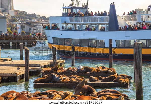 San Francisco, California, United States - August 14, 2016: tourist boat at Pier 39. Tourists looking Sea Lions colony, a popular tourist attraction of San Francisco Bay. Travel and leisure concept.