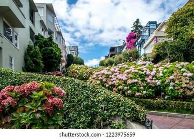 San Francisco, California, USA - August 29th 2018 - Lombard St garden on a sunny day