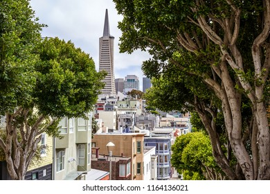 SAN FRANCISCO, CALIFORNIA, USA - MAY 14, 2018: View of the city and Transamerica skyscraper from the hill