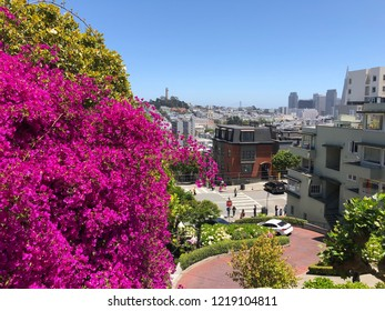 San Francisco city architecture landscape with flowers on Lombard Street