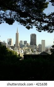 San Francisco City Buildings From Far Trees