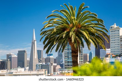 San Francisco, USA - June 11 2018: Downtown San Francisco with the Transamerica Pyramid and huge Palm tree