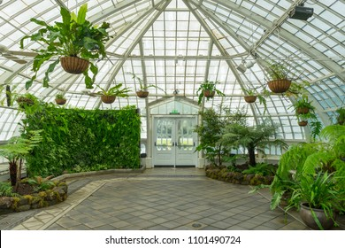 San Francisco,California, USA - April 20, 2018 : Interior view of conservatory of Flowers at Golden Gate Park on April 20, 2018 in San Francisco,California.