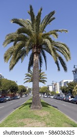 San Francisco's Dolores Street with palm trees under blue sky. Vertical.
