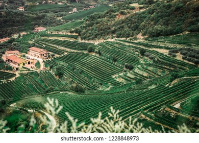 San Giorgio di Valpolicella, Italy - view of fields of Amarone vineyards