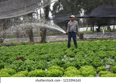 San Gregorio Atlapulco, Mexico/Mexico--October 26, 2018. A chinampero (owner of land in the chinampa) watering his produce.