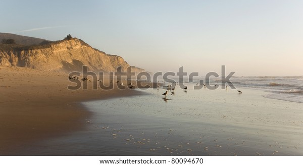 San Gregorio Beach and cliffs, California State Beach and Wildlife Preserve, at sunset with birds