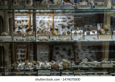 San Jose / Costa Rica - 01.22.2019: A photo of scientific exhibition of invertebrates (seashells and insects) at the Natural History Museum of La Salle