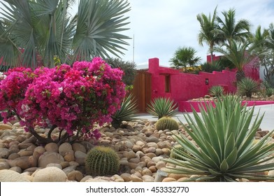 SAN JOSE DEL CABO, BAJA CALIFORNIA SUR, MEXICO - FEBRUARY 26, 2016: Bright pink wall and flowers, San Jose del Cabo, Baja California Sur, Mexico