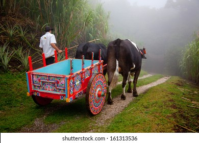 SAN JOSE,COSTA RICA - NOVEMBER 20: Colorful Costa Rican Ox Cart and oxen down a foggy country road on November 20, 2010. The NEF also ranked Costa Rica in 2009 as the greenest country in the world.