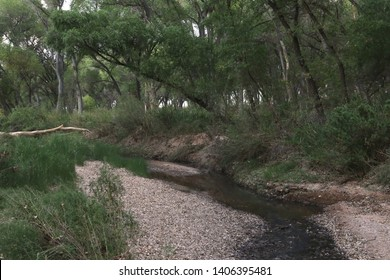 San Pedro River, San Pedro Riparian National Conservation Area, Sierra Vista, Arizona